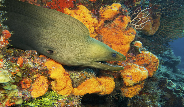find marine life when diving cozumel