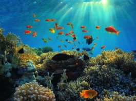 reef fish red sea