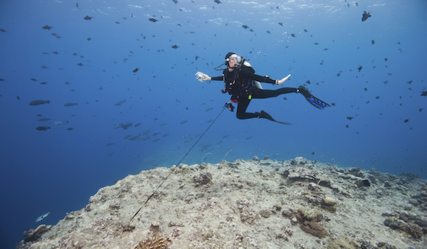reef hook scuba diving 2