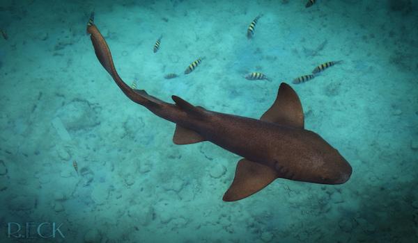 shark in cozumel