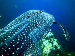 Best diving in Thailland Koh Tao