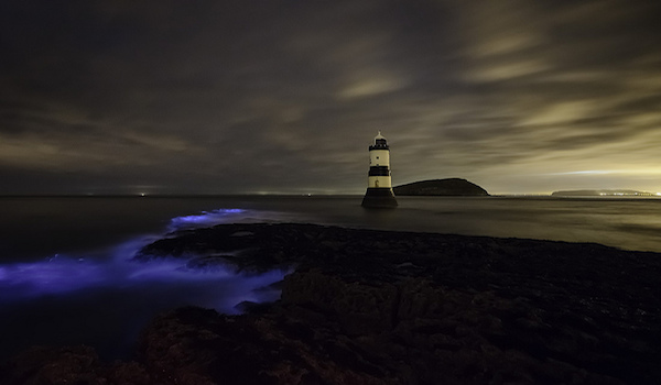 Bioluminescent waves