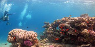 Explore coral reefs when diving Dahab