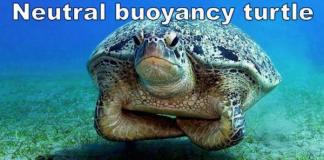 buoyancy ninja turtle