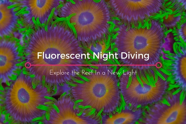 fluorescent night diving