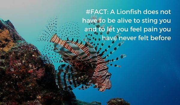 hunt Lionfish safe
