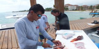 preparing the lionfish