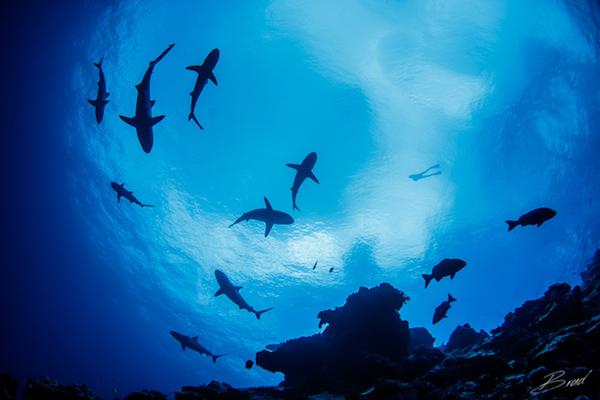shark vertigo
