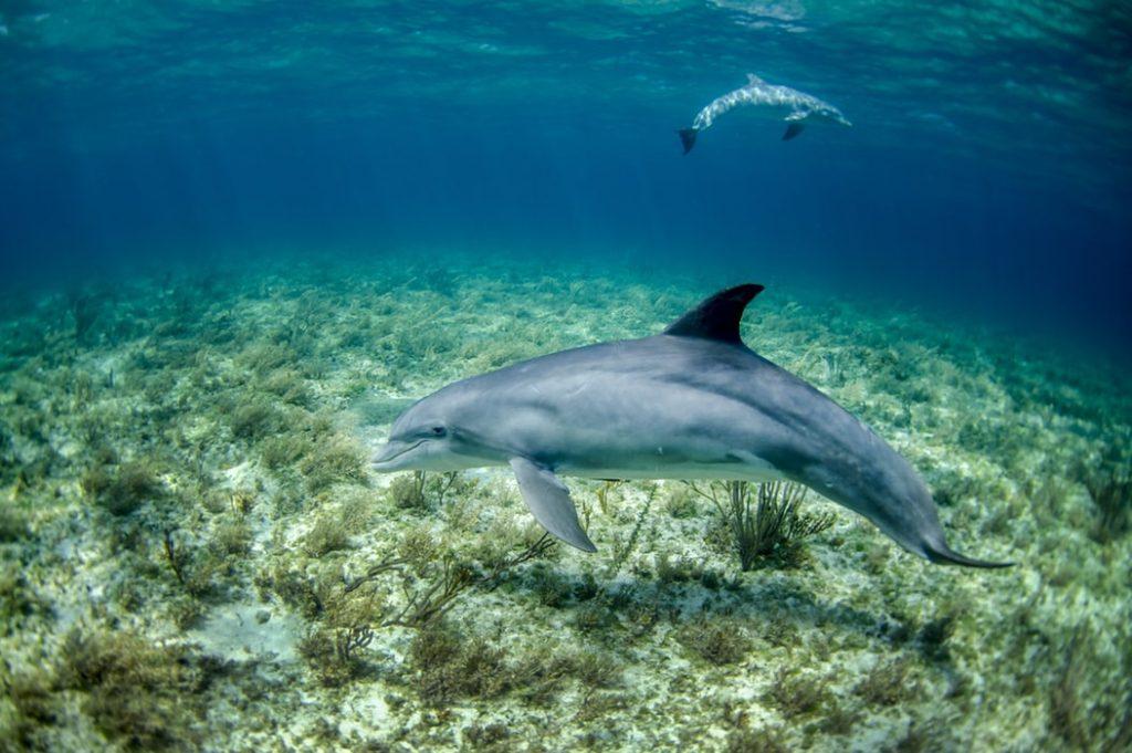 scuba diving galapagos dolphins
